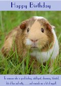"Guinea Pig-Happy Birthday - ""Reminds Me A Lot Of Myself"" Theme"